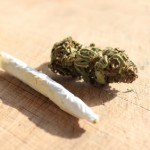 iStock_000015958345XSmall cannabis
