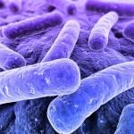 shutterstock_14313976- bacteria