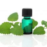shutterstock_77618620 melissa aromatherapy lemon balm oil
