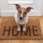 Home sweet home dog