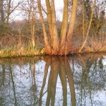 Trees reflected in a canal