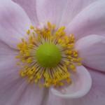 Centre of a flower blossom