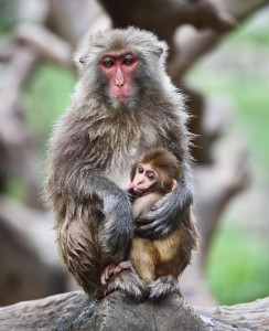 Clearly, this blog is much more than an opportunity to show cute photos of monkeys.