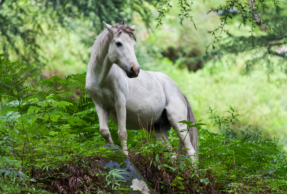 No ketamine blog is complete without a picture of a unicorn.