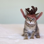 Yes, it's a Christmas kitten. Well this is the internet. Designed to share knowledge. And pictures of kittens.