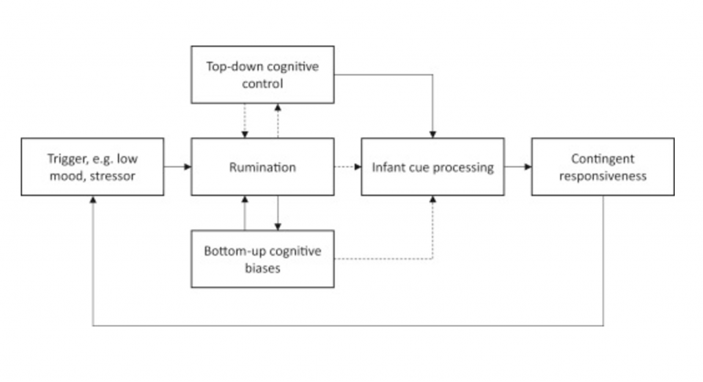 Information processing model of rumination and effects on parenting behaviour. Solid lines indicate positive links and dotted lines indicate negative/inhibitory links.