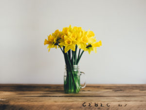 Unfortunately this review doesn't help us choose a brace to keep teeth clean. Here are some spring flowers to cheer you up!