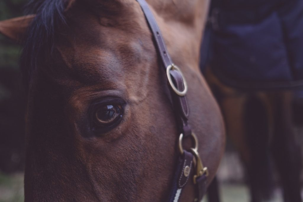 NIHR is investing significantly in virtual reality. Are they backing the right horse?
