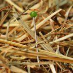 needle-in-a-haystack-1752846_1280 (1)