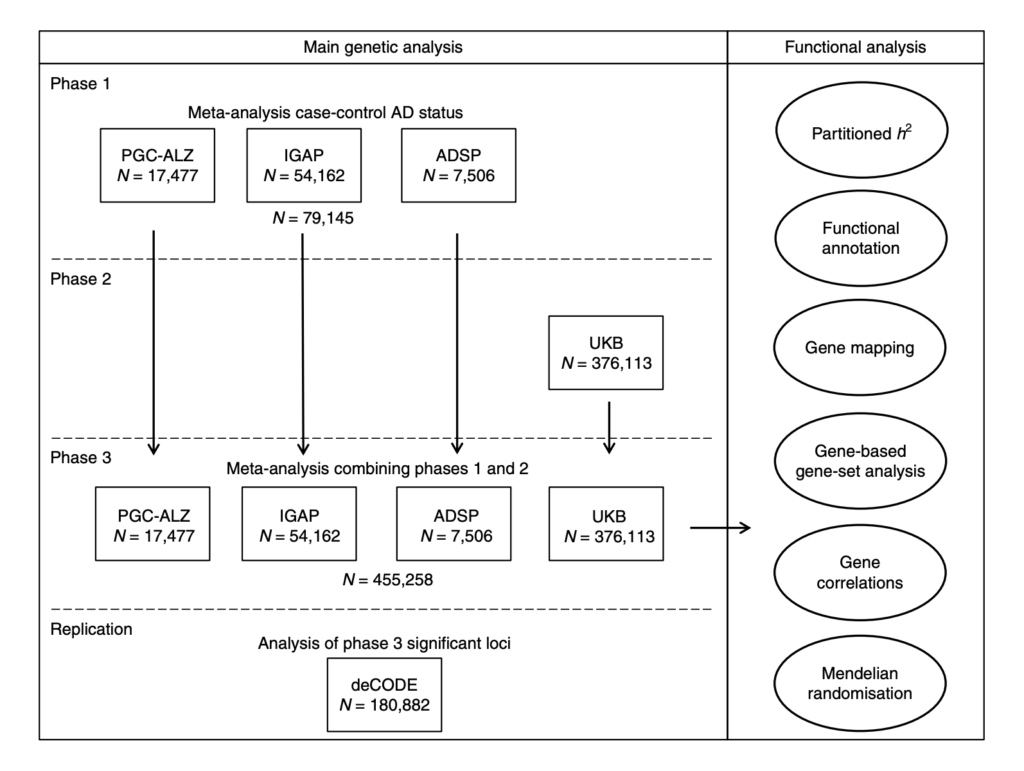 Fig. 1 | Overview of analysis steps. The main genetic analysis encompasses the procedures to detect GWAS risk loci for AD. The functional analysis includes the in silico functional follow-up procedures with the aim to put the genetic findings in biological context. N=total of individuals within specified data set.