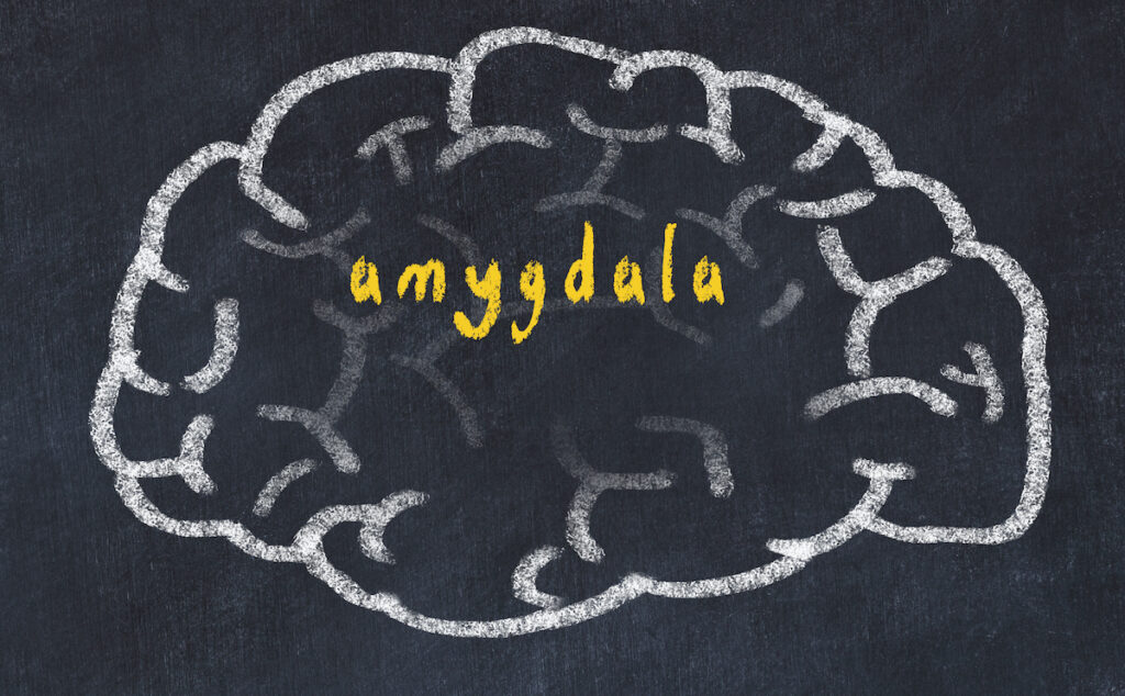 It has previously been demonstrated that people who self-harm have an over-active amygdala (emotional centre of the brain) and poor connectivity with between the amygdala and medial prefrontal cortex (responsible for higher order thinking).