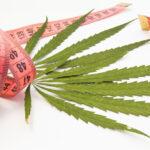 Marijuana,And,Weight,Loss.,Two,Green,Leaf,Of,Marijuana,,Hemp